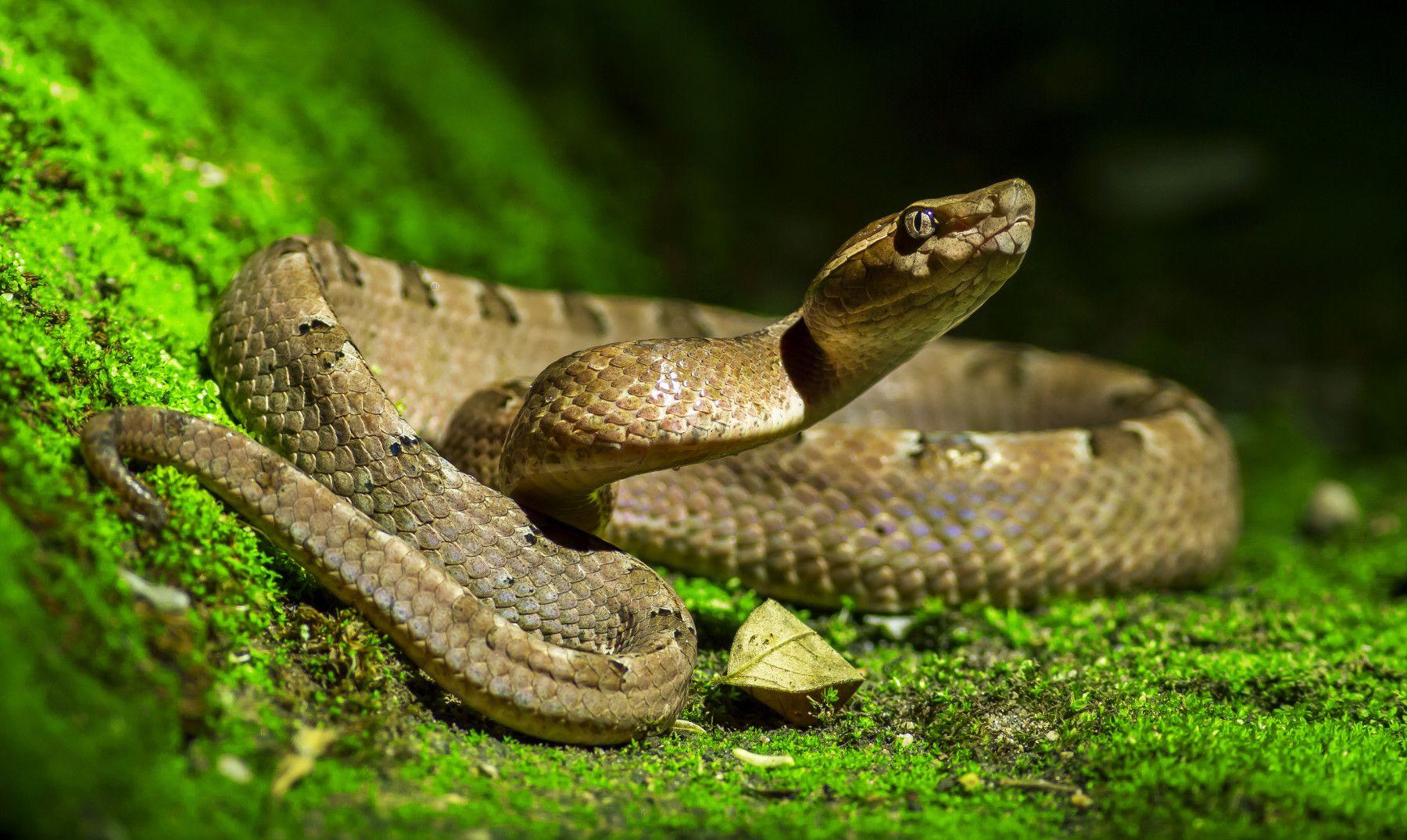 soñar con reptiles grandes