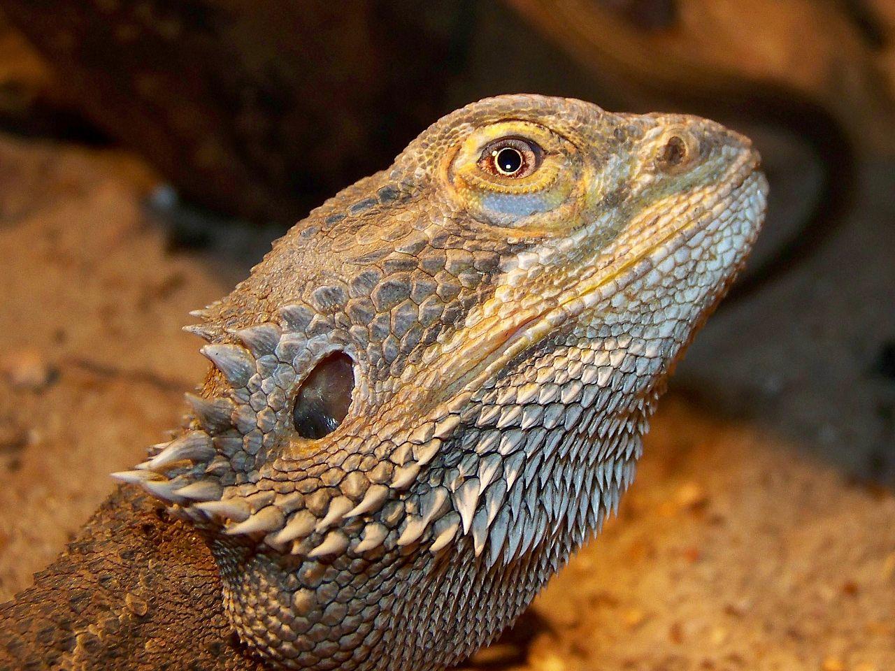 soñar con reptiles y anfibios