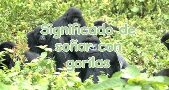 soñar con gorilas y monos