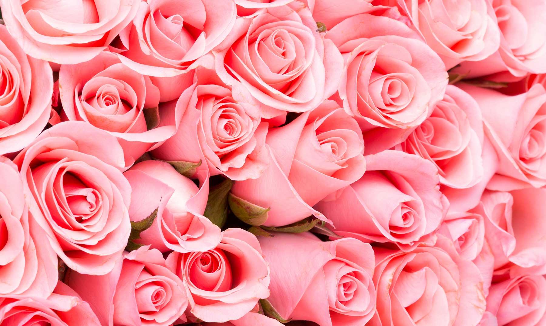 soñar con rosas rosas