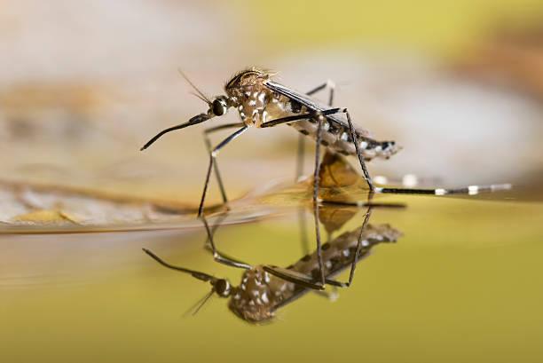 soñar con mosquitos volando