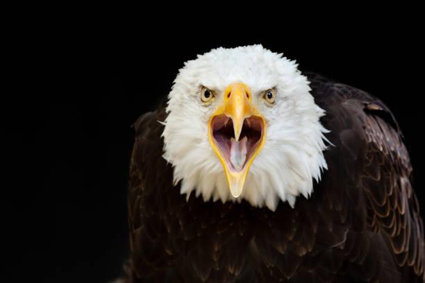 soñar con águilas significado