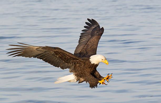soñar con águilas volando