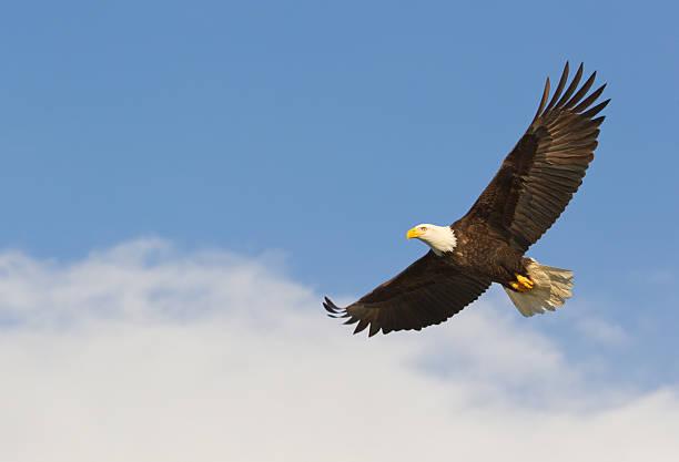 soñar con águila gigante