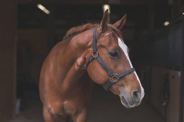 soñar con un caballo marron