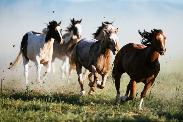 soñar con un caballo negro