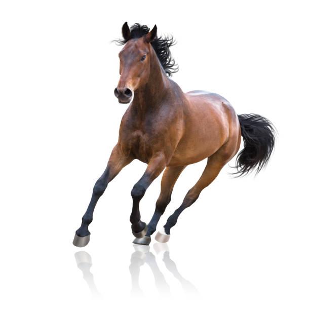 soñar con un caballo herido