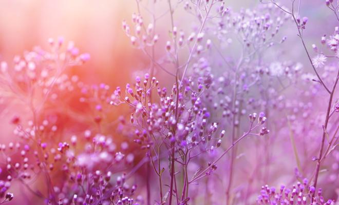 soñar con color rosado psicoanalisis