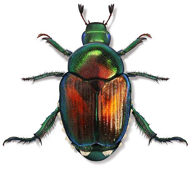 soñar con escarabajos en el pelo