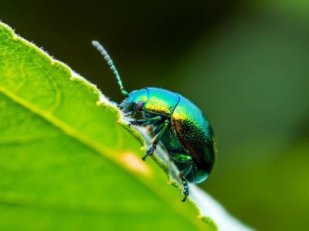 soñar con escarabajos negro