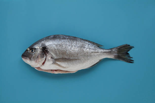 soñar con pescado brillante