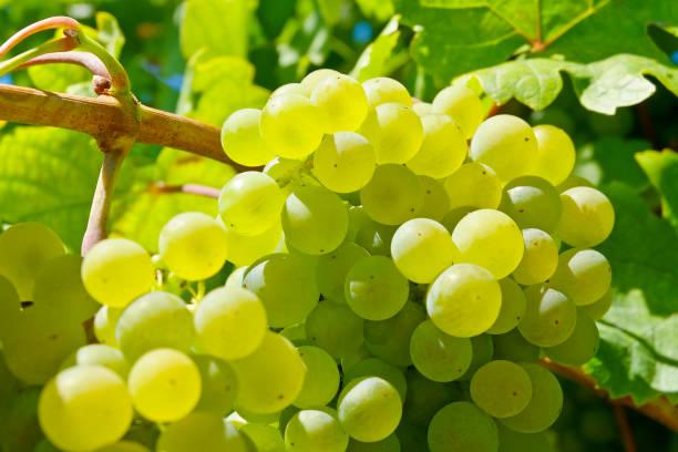 soñar con uvas gigantes