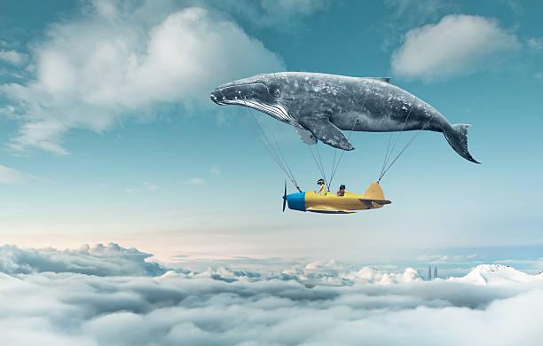 soñar con ballenas misabueso