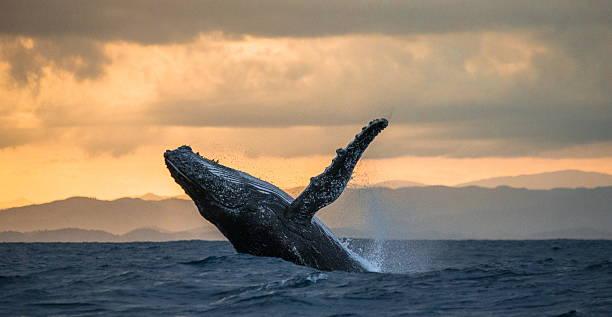 soñar con ballenas en una piscina