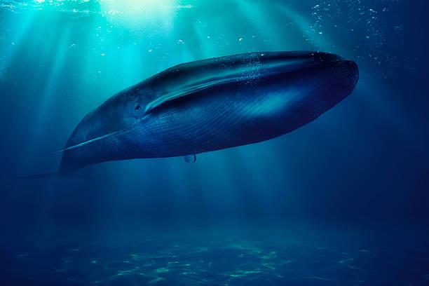soñar con ballenas orcas