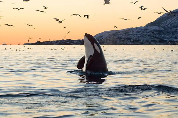 soñar con ballenas blancas