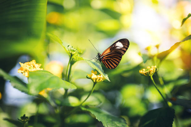 soñar con 4 mariposas
