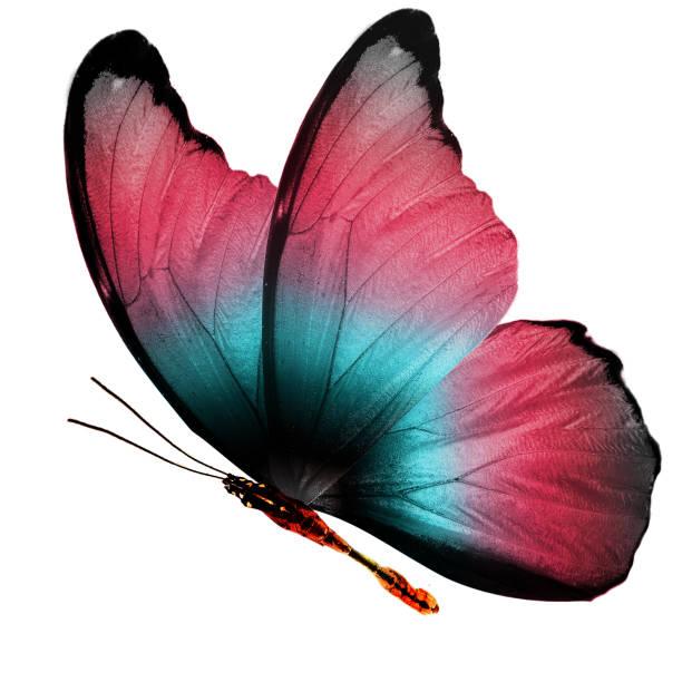 que significa soñar con 3 mariposas