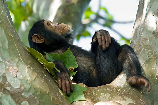 soñar con monos asesinos