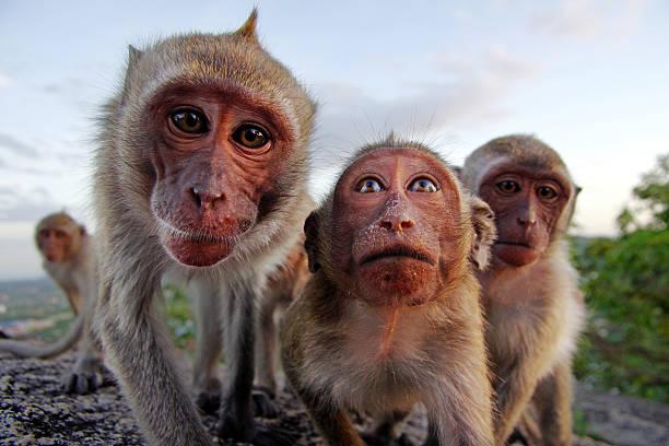 soñar con monos euroresidentes