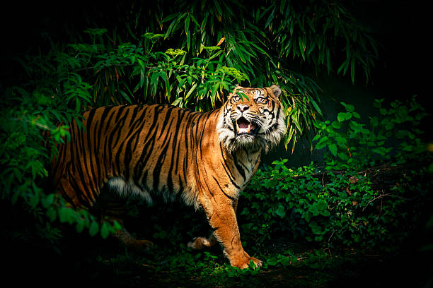 soñar con tigres blancos