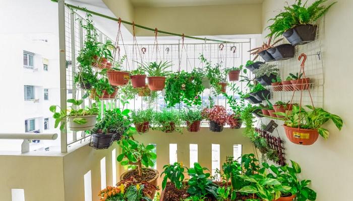 soñar con plantas en casa