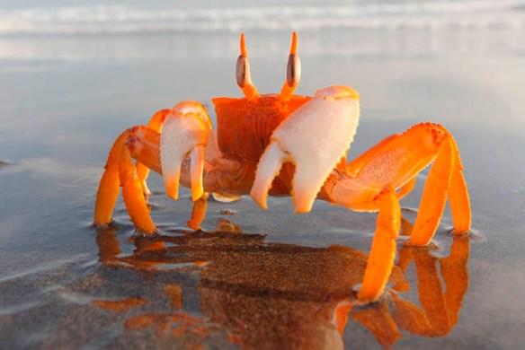 soñar con cangrejos que atacan