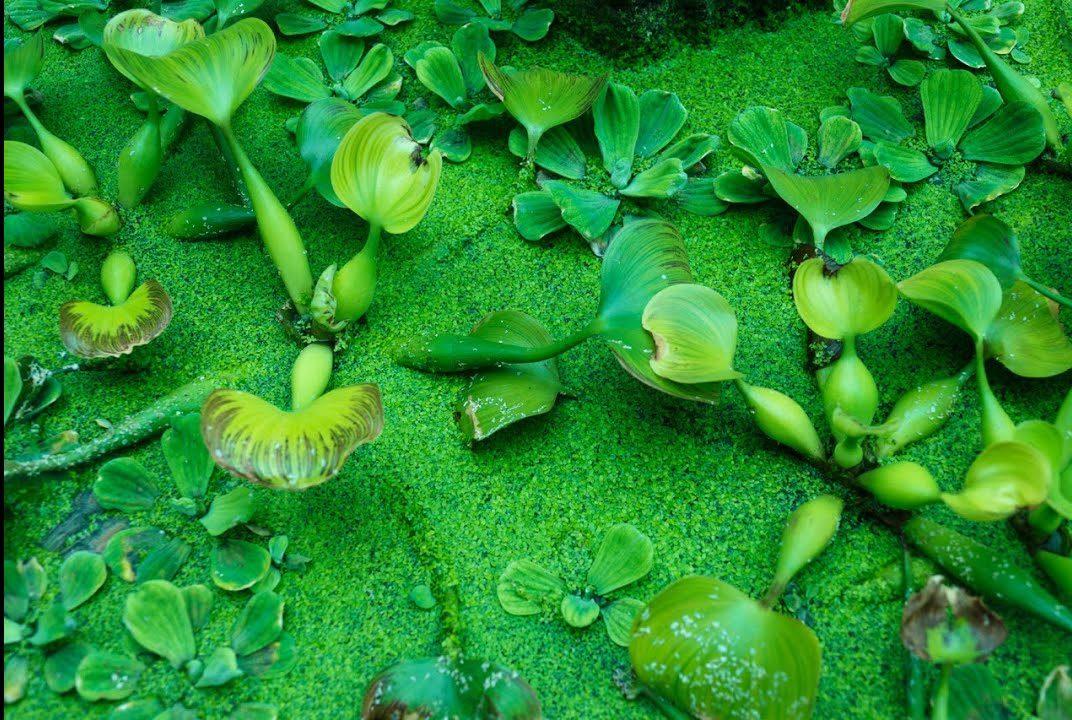 soñar con plantas y flores