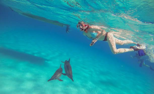 soñar con delfines azules