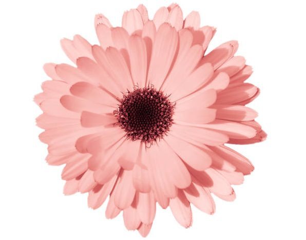 soñar con flores color rosa