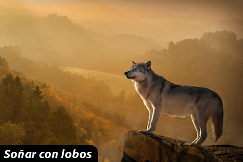 soñar con lobos gigantes