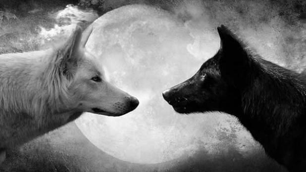 soñar con lobos negro