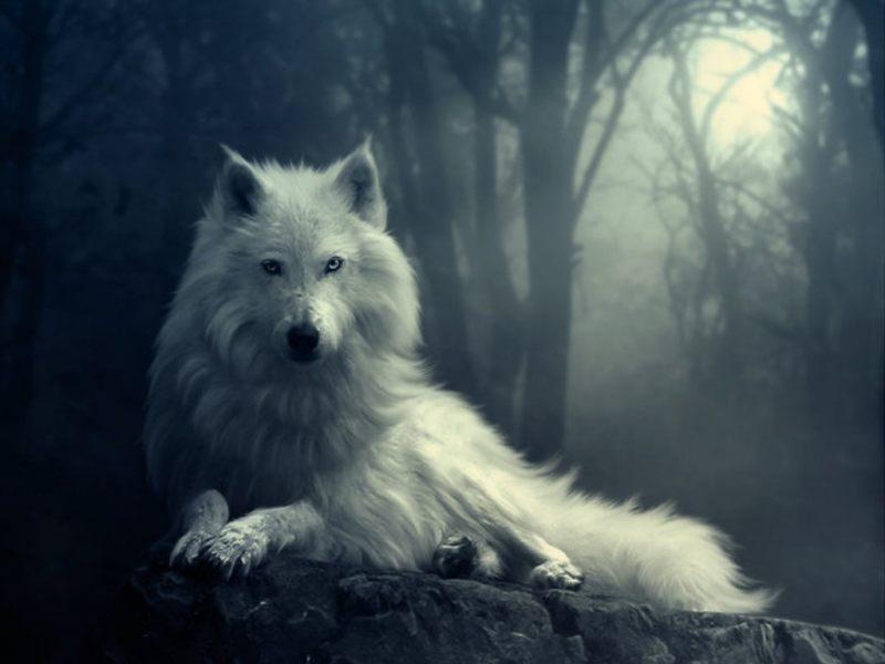 soñar con lobos aullando