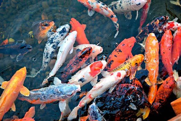 soñar con peces vivos