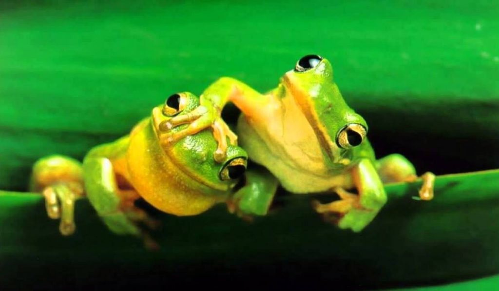 soñar con ranas pequeñas