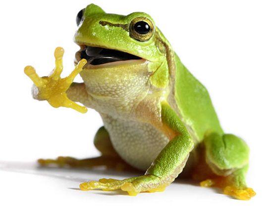 soñar con ranas verdes