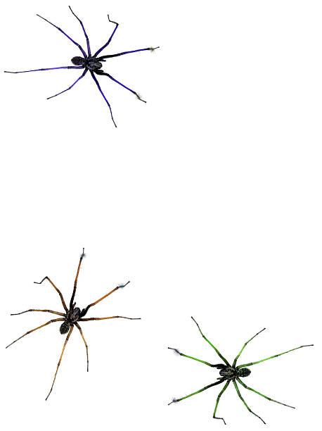 soñar con tarantulas marrones