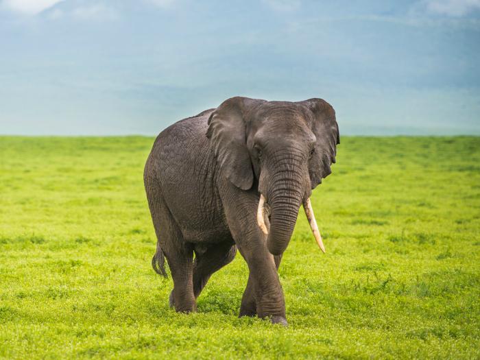 soñar con elefantes muertos