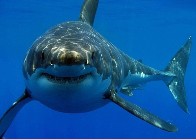 soñar con tiburones y ballenas