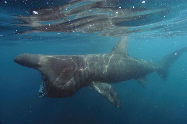 soñar con tiburones en el mar