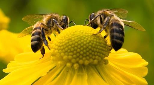 soñar con abejas muertas