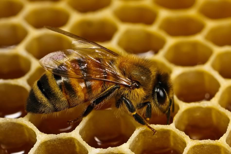 soñar con abejas africanas