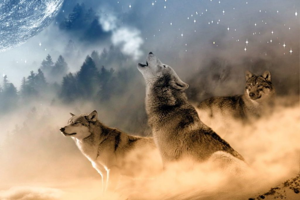 soñar con animales agresivos