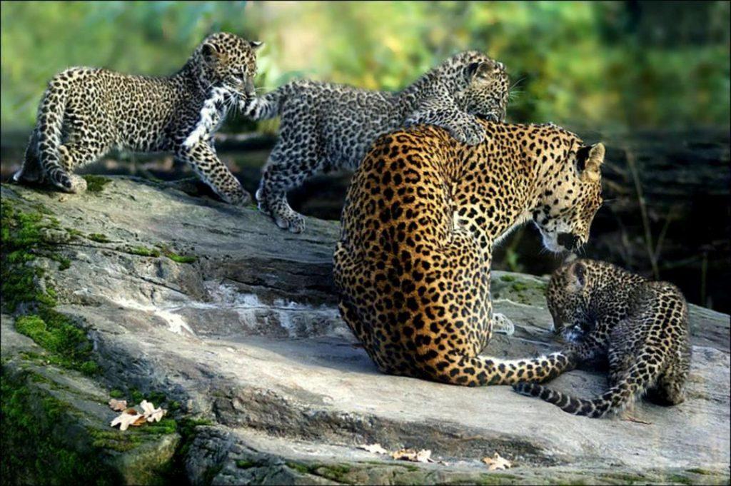 soñar con animales de la selva