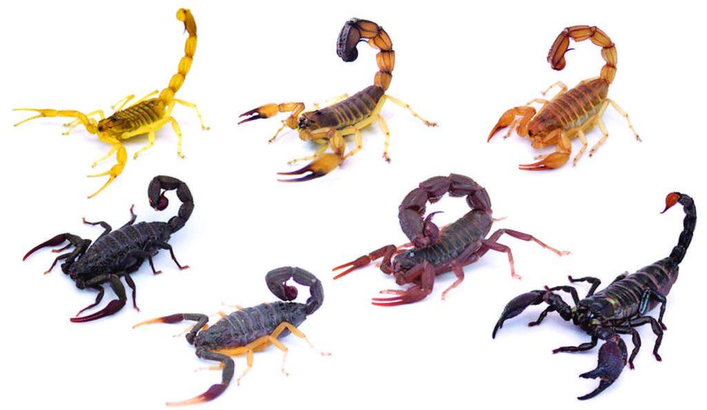soñar con escorpiones de colores