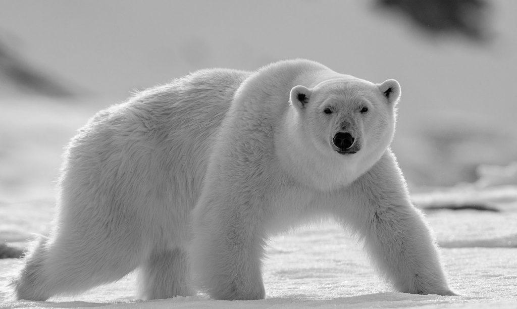 soñar con osos bonitos