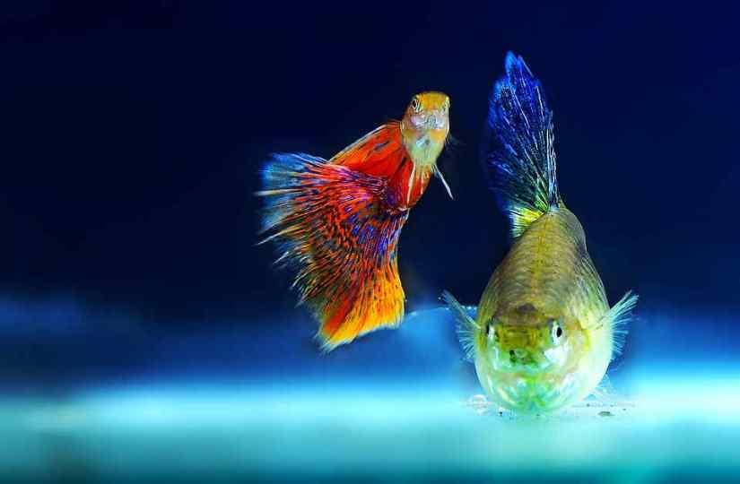 soñar con peces en pecera