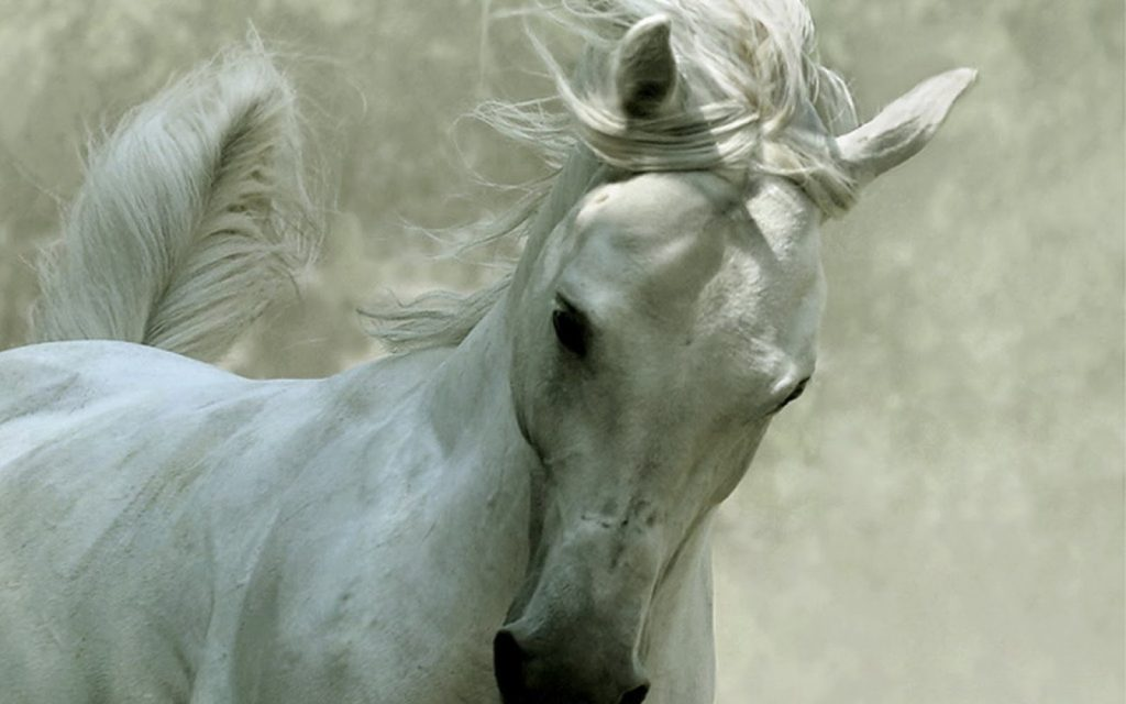 soñar con caballos de carrera