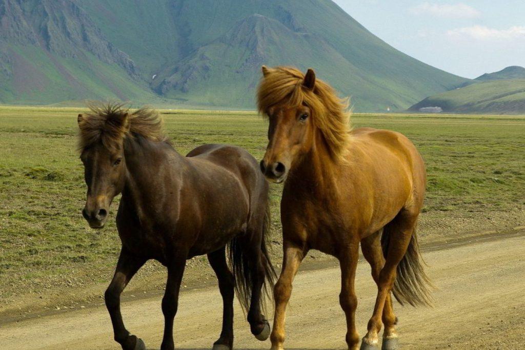 soñar con caballos color cafe