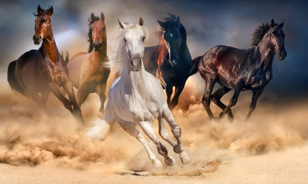soñar con caballos finos